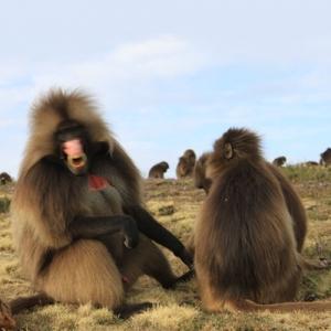 Äthiopien - Natur-Reise auf dem Dach Afrikas - Simien Mountains National Park 6 Tage