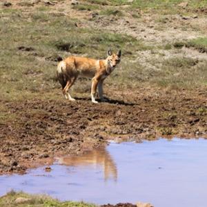 Rundreise Tierwelt Äthiopiens - eine aufregende Naturreise 14 Tage
